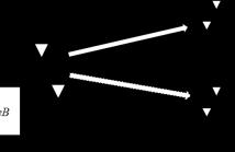 MU-MIMO System Model